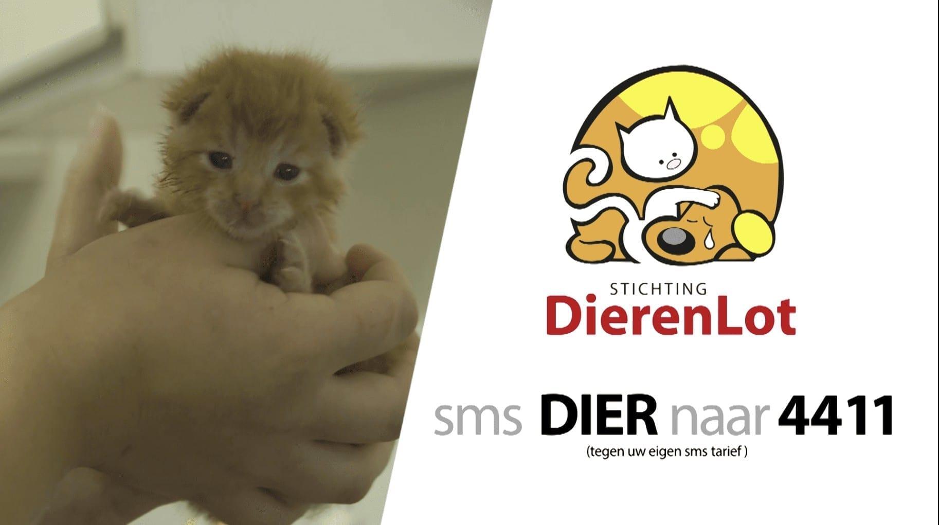Campagne Samen Voor Dieren Stichting DierenLot